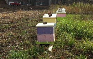 Apiary on a nice November afternoon.