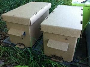 Our nucs include 5 frames of bees, a laying queen, all in a cardboard nuc box.